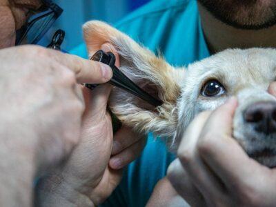 pronto soccorso veterinaria